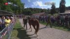 Video «Infizierte Pferde versteigert» abspielen