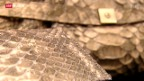 Video «Taschen aus Krokodilleder» abspielen