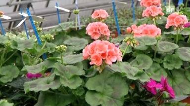 26.05.09: Gartenerde im Test: Worin Pflanzen gut gedeihen
