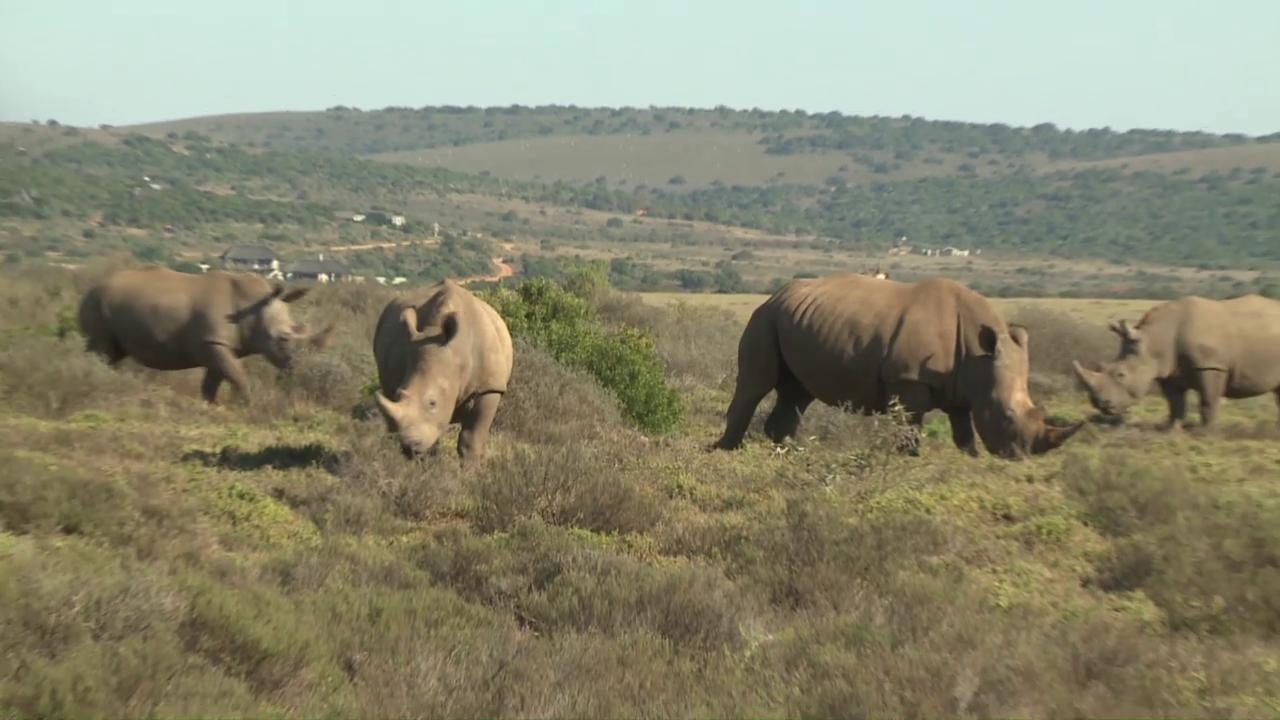 Pätagei in Südafrika – Nashorn
