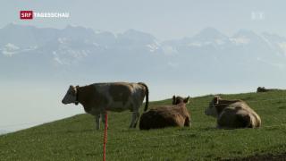 Video «20 Milliarden kostet die Schweizer Landwirtschaft» abspielen