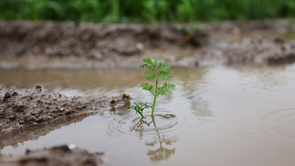 Klimawandel bringt Landwirtschaft in Zugzwang