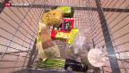 Video «Konsumenten profitieren noch nicht von sinkenden Preisen» abspielen