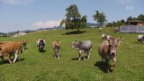 Video «Kampf den Kuh- und Kirchenglocken: Lärmsensible machen mobil» abspielen