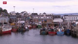 Video «Schottland entscheidet über seine künftige Geschichte» abspielen