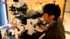 Video «Durchbruch beim Klonen von menschlichen Zellen» abspielen