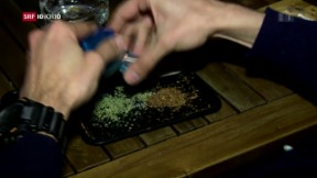 Video «FOKUS: Cannabis-Clubs in Barcelona» abspielen