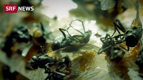 Link öffnet eine Lightbox. Video Bienen und Co. sterben weiter abspielen