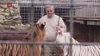 Video «Raubtierpark Subingen ringt um Lösung» abspielen