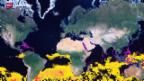 Video «Klima-Umdenken in der Wirtschaft» abspielen