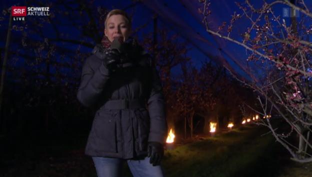 Video «Ofenwärme für Thurgauer Aprikosenblüten» abspielen