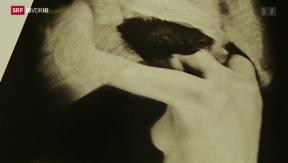 Video «René Groebli: Das Auge der Liebe» abspielen