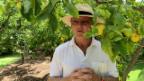 Video «Rolf Knie: Im Kakteengarten auf Mallorca» abspielen