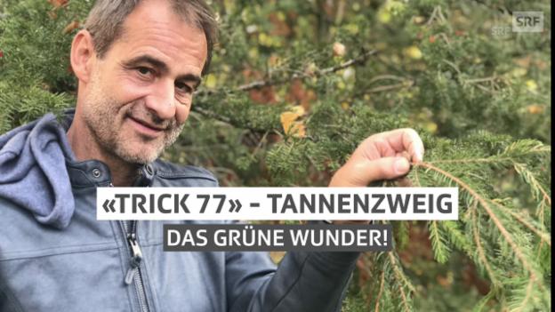 Video «Der Tannenzweig – das grüne Wunder» abspielen
