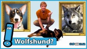 Video «Wie kam der Hund zum Menschen?» abspielen