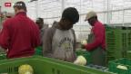 Video «Flüchtlinge im Arbeitsmarkt» abspielen