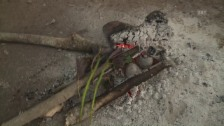 Video «Behandlung mit der Pflanzenpeitsche» abspielen
