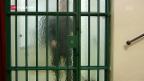 Video «Schweizer Gefängnisse in der Kritik» abspielen