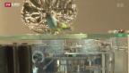 Video «Letzte Schweizer Musikdosen-Manufaktur feiert 150-Jahre-Jubiläum» abspielen