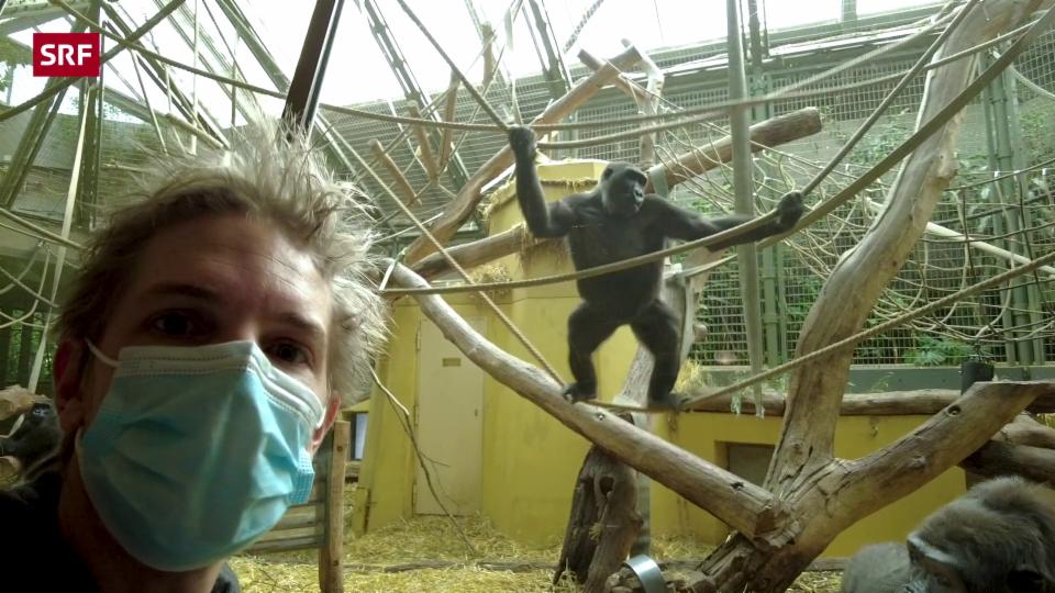 Wie die Tiere im Zoo den Lockdown erlebt haben