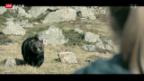 Video «In Solothurn ist der Bär los» abspielen