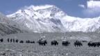 Video «Wetter aus Bern für den Everest» abspielen