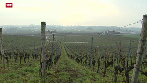 Video «Gepanschter Wein in der Waadt» abspielen