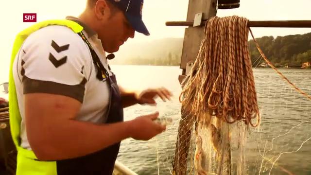 Schwingen: Christian Stucki unterwegs mit dem Berufsfischer