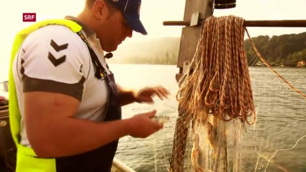 Video «Schwingen: Christian Stucki unterwegs mit dem Berufsfischer» abspielen