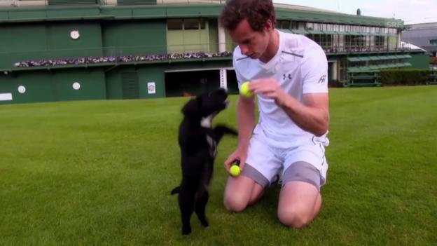 Video «Murray trainiert Polizeihund-Nachwuchs» abspielen