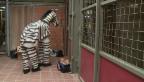 Video «Ein Zebra kommt selten allein...» abspielen