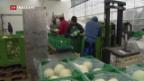 Video «Flüchtlinge in Schweizer Landwirtschaft integrieren» abspielen