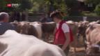 Video «Mit Rindfleisch gegen Milchpreiszerfall» abspielen