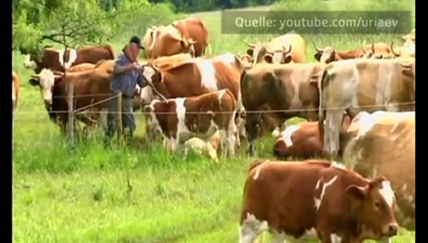 Video «Weideschlachtung in Deutschland (unkommentiert)» abspielen