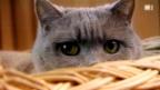 Video «Das grosse Geschäft mit den Haustieren» abspielen