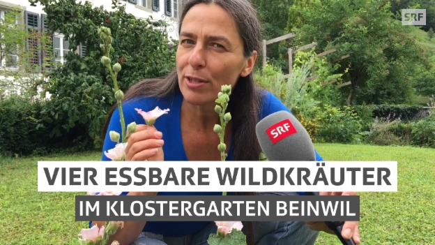 Video «Vier essbare Wildkräuter» abspielen