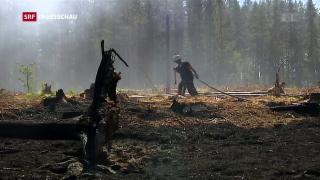 Video «Wälder lodern weiter» abspielen