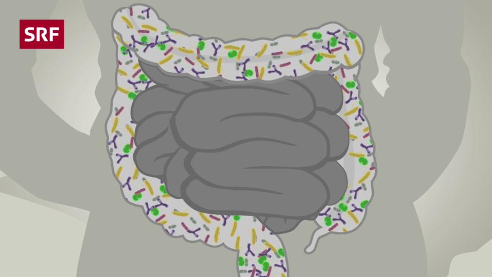 Mikroben-Dschungel Darm