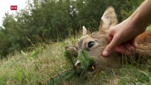 Laschar ir video «Ursin Decurtins ha gì success»