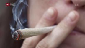 Video «Aus für Berner Cannabis-Studie» abspielen