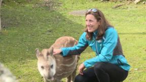 Video «Sportlerin im Zoo: Nicola Spirig ist Tierpatin » abspielen