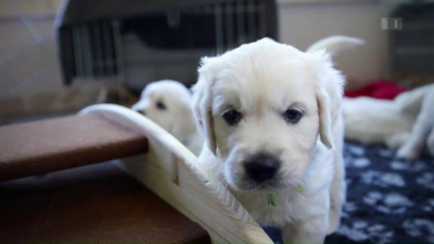 Video «Tiergeschichten (2/10): Herzige Tierkinder» abspielen