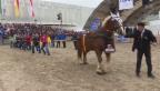 Video «Seilziehen: 11 Schwinger gegen 1 Pferd» abspielen