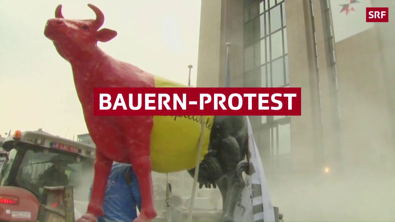 Bauern überschütten EU-Gebäude mit Milchpulver