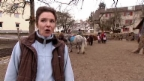 Video «Wiehernder Amtsschimmel: Reiterhof verboten» abspielen