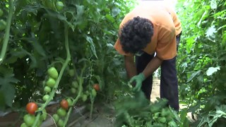 Video «Versklavte Flüchtlinge» abspielen