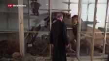 Video «Naturalien-Kabinett in Einsiedeln wird entstaubt» abspielen