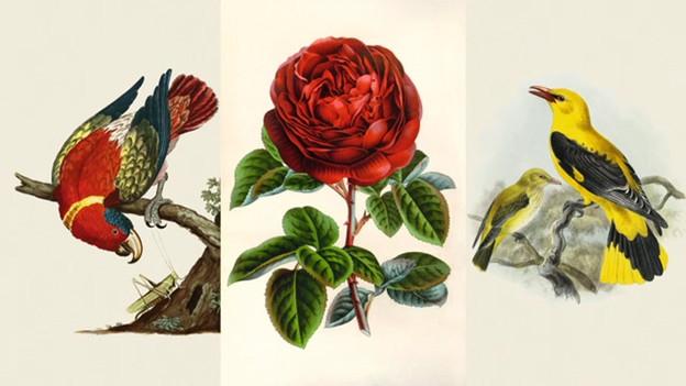 Die Naturliteratur entdeckt die lebendige Umwelt