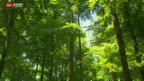 Video «Mehr Wertschätzung für den Wald» abspielen