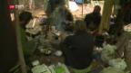 Video «Unbeliebte Waldbewohner» abspielen